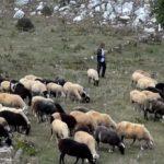 Σύσκεψη με κτηνοτρόφους στην Καλλονή