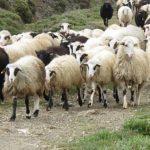 Η Περιφέρεια να πάρει αποφάσεις για την προστασία του εισοδήματος κτηνοτρόφων
